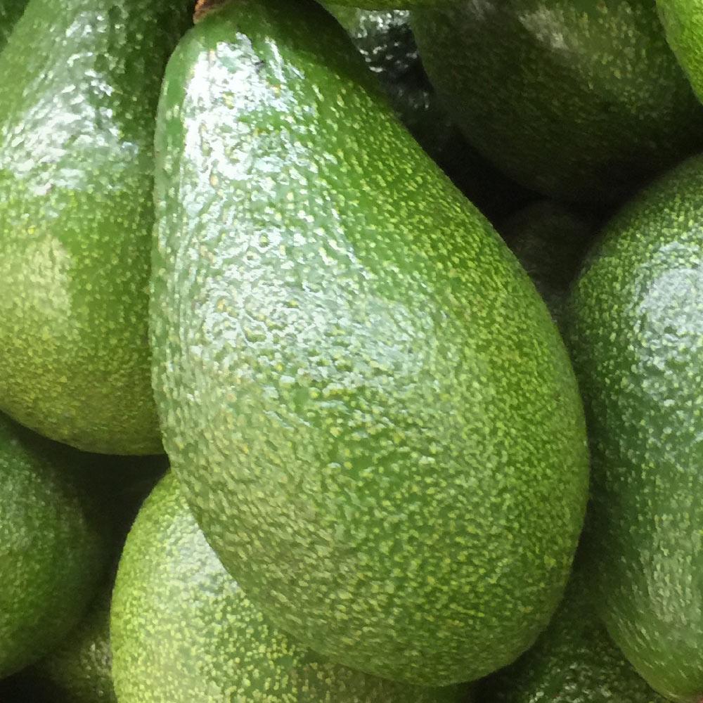 avocado verde Spreafico