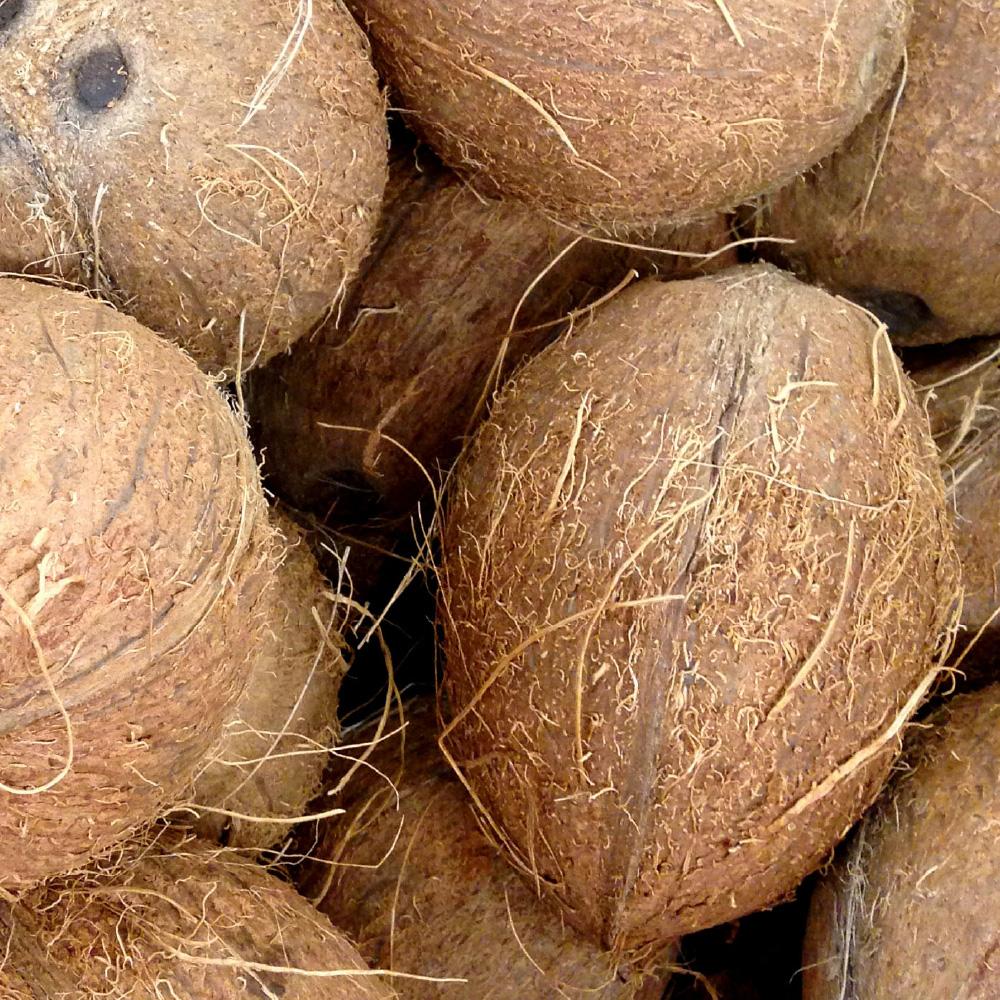 cocco Spreafico