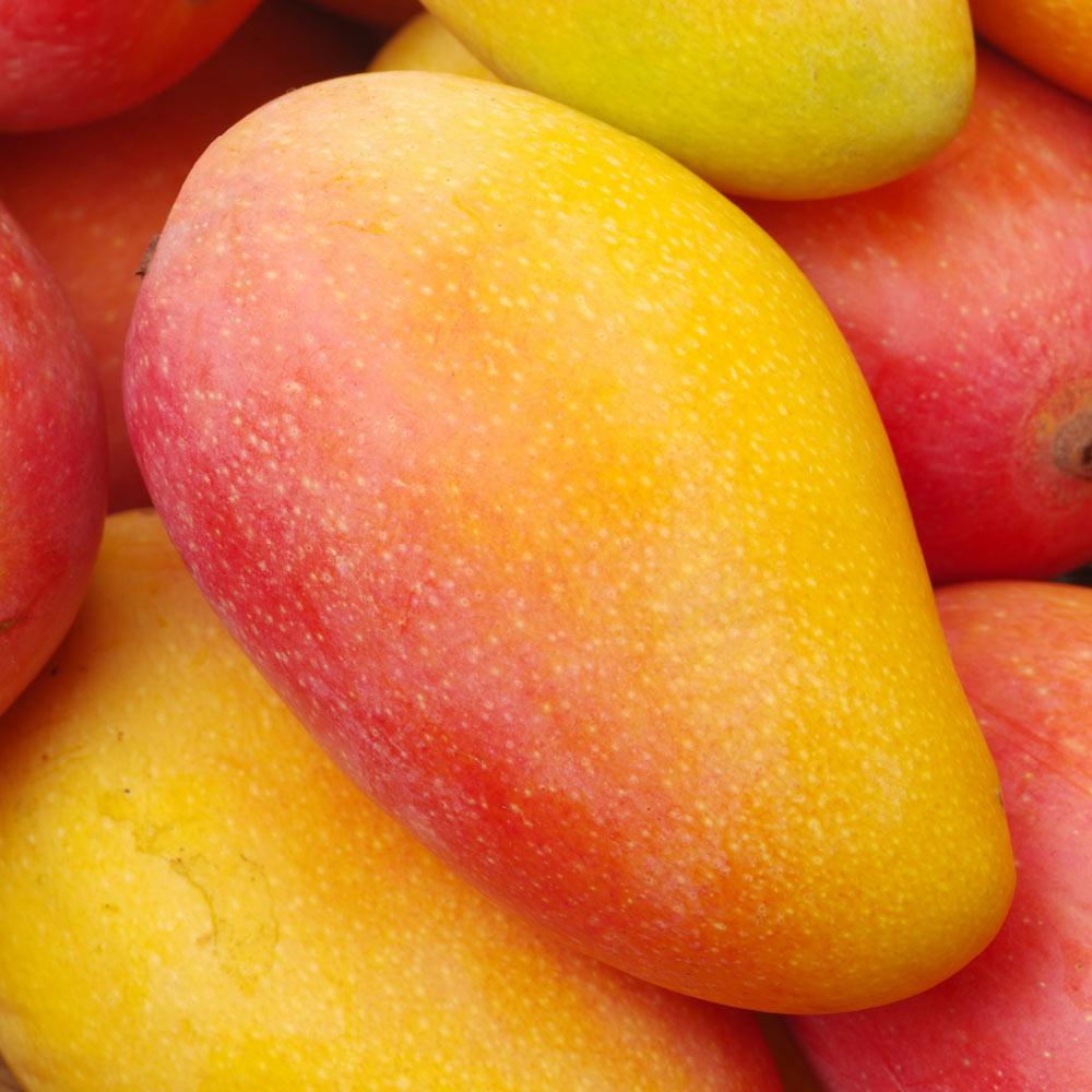 mango premium Spreafico