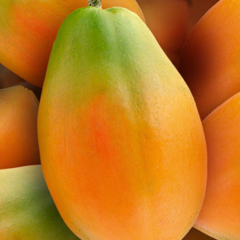 papaya golden Spreafico
